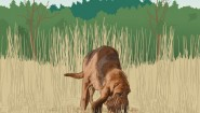 dog_tracking_scent